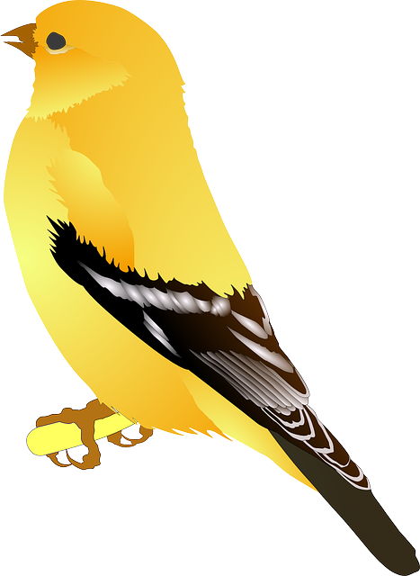 Free vector graphic: Goldfinch, Bird, Yellow, Golden.
