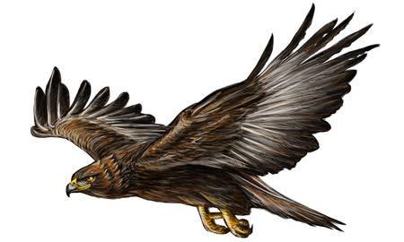 Golden eagle clipart 4 » Clipart Station.