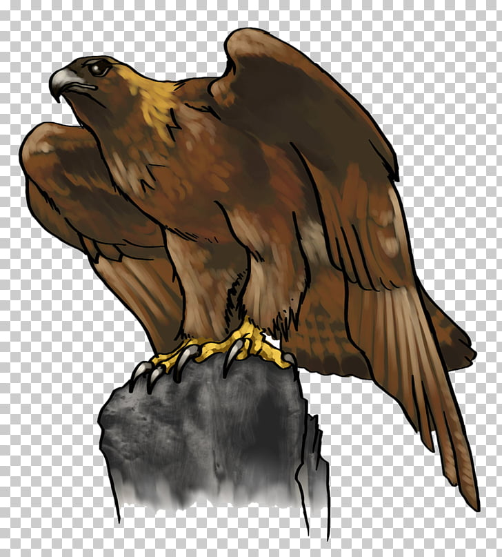 Bald Eagle Golden eagle , cartoon eagle PNG clipart.