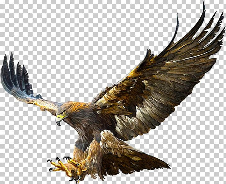 Bald Eagle Golden Eagle Flight Drawing PNG, Clipart, Bald.
