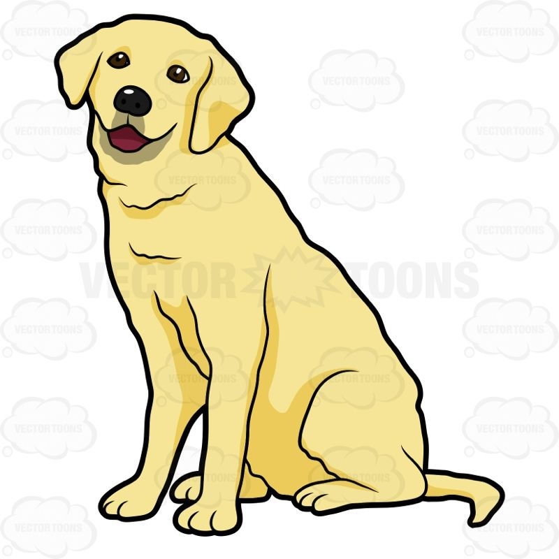 Side View Of A Yellow Labrador Sitting #animal #canine.