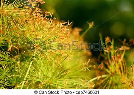 Stock Photography of golden morning.