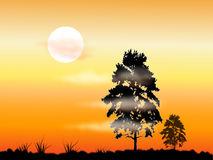 Morning Fog Trees Shadows Stock Illustrations, Vectors, & Clipart.
