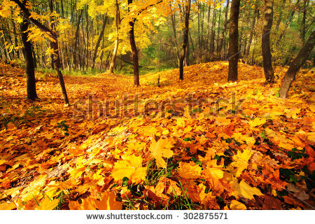 Golden October Stock Photos, Images, & Pictures.