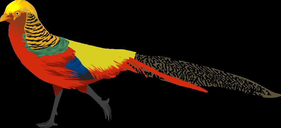 Golden Pheasant by AdamZT2 on DeviantArt.