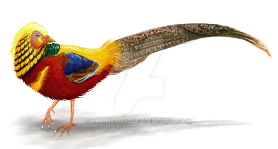 Golden Pheasant by Tianithen on DeviantArt.