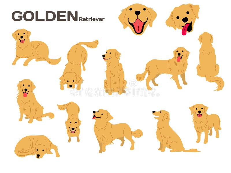 Golden Retriever Stock Illustrations.