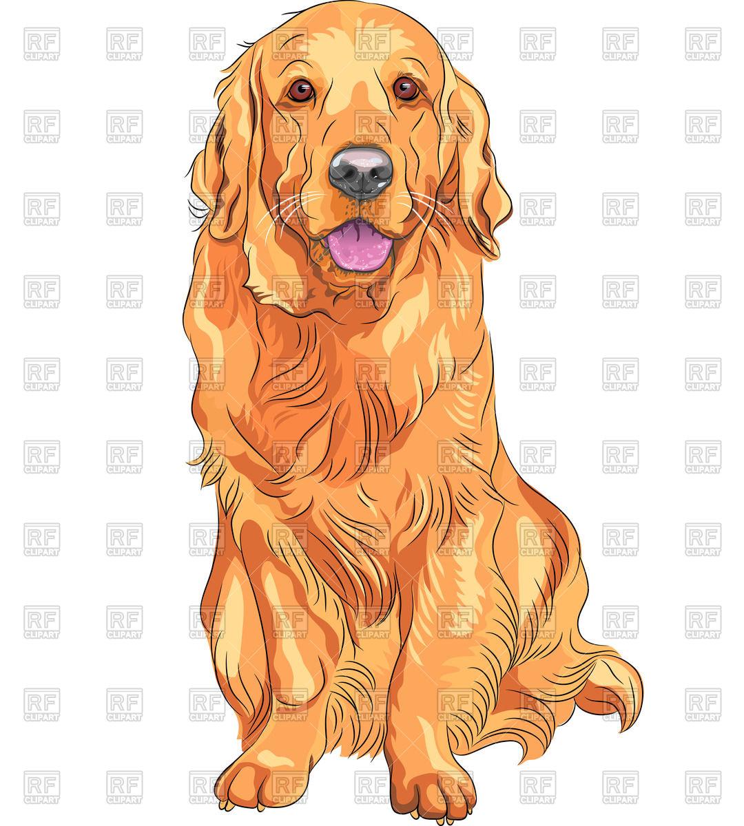 Sitting red gun dog of Golden Retriever breed Stock Vector Image.
