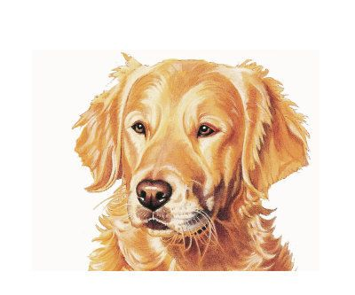 Golden Retriever Clipart Clipground