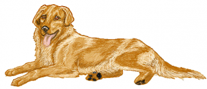 Retriever Clip Art Download.