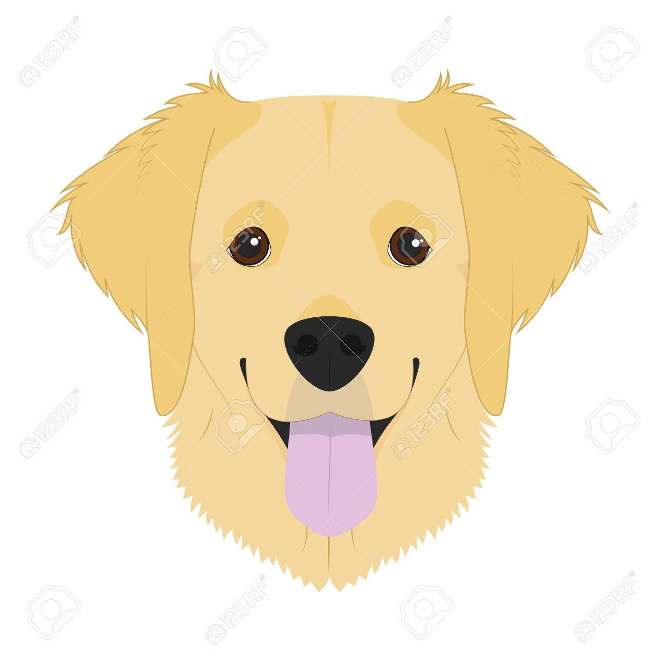 Golden Retriever dog isolated on white background vector.