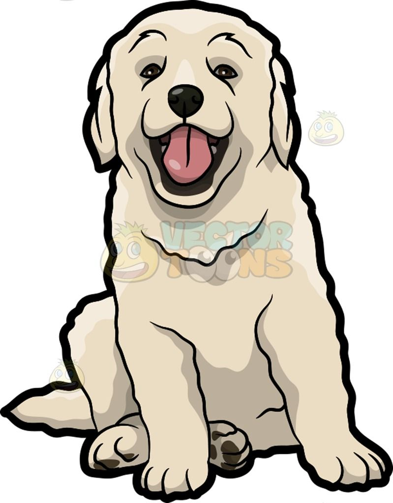 A cute Golden retriever puppy : A dog with long scruffy off white.