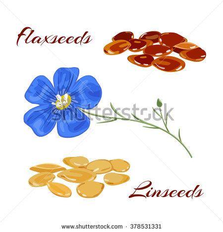 Flax Seed Stock Photos, Royalty.