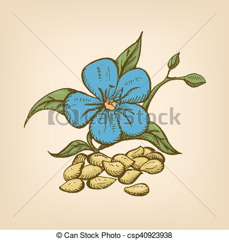 Vectors of Dried seeds of golden flax with flowers. Vector.