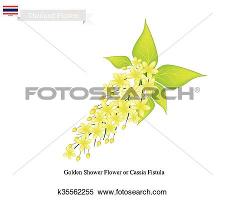 Clipart of National Flower of Thailand, Golden Shower Flower.