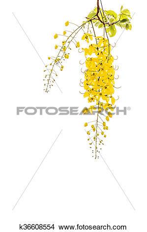 Golden shower clipart #7