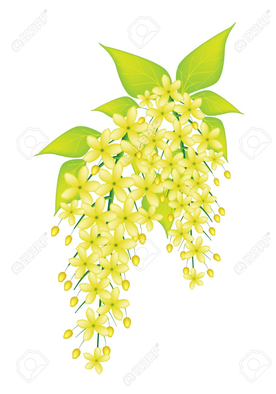 Beautiful Flower, An Illustration Yellow Color Of Cassia Fistula.