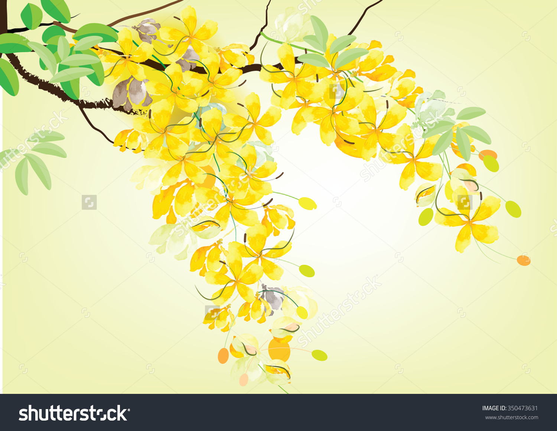 Golden Shower Flowers Ratchaphruek Yellow Watercolor Stock Vector.