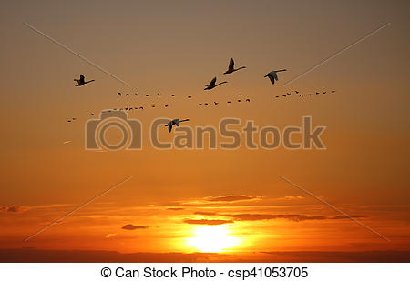 Stock Photography of Golden sky on sunset or sunrise with flying.