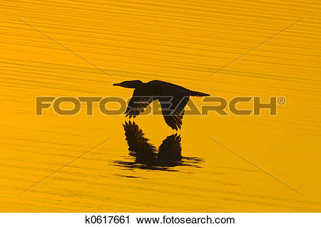 Stock Photography of Touching golden water k0617661.