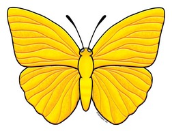 Butterfly clipart yellow.