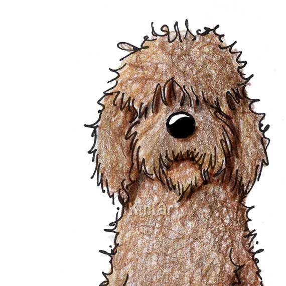 Goldendoodle dog clipart.