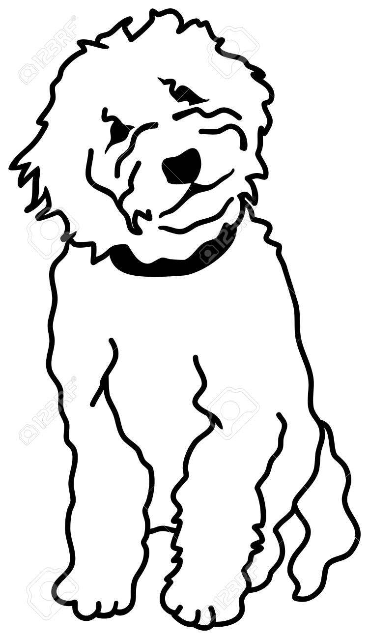 Goldendoodle silhouette sitting in white.