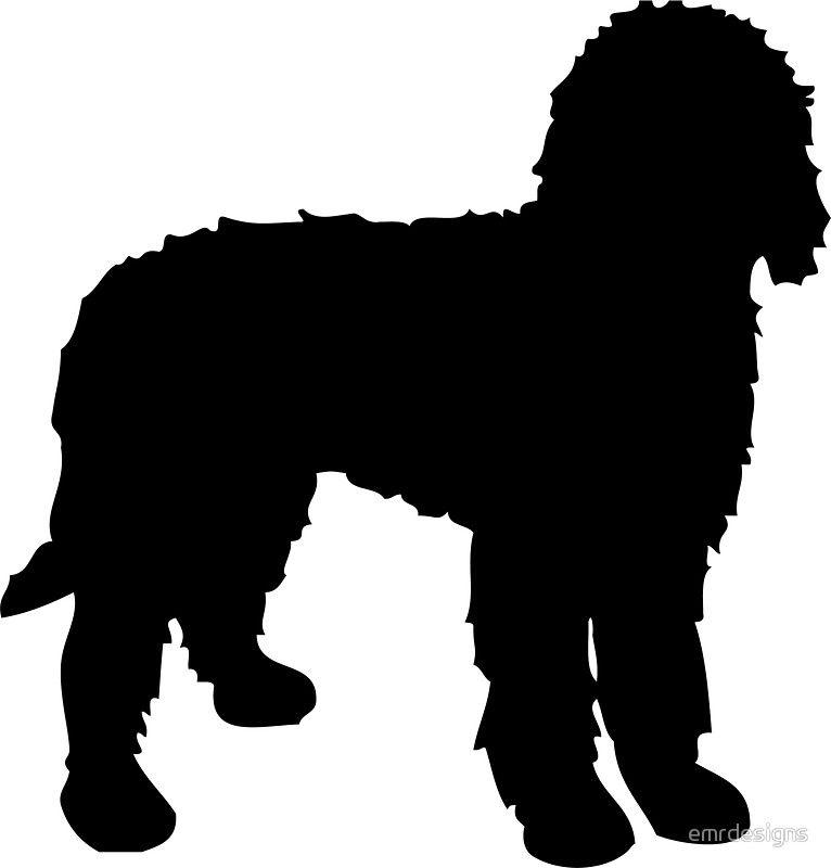 Collection of Labradoodle clipart.