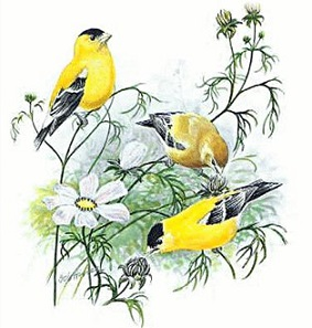 Free Goldfinch Clipart.