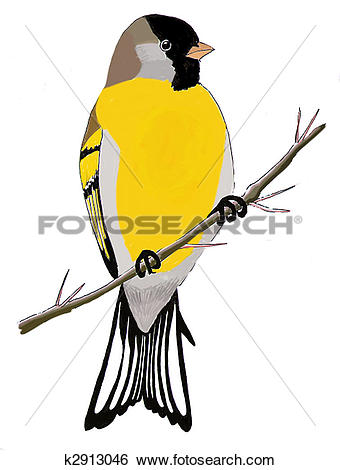 Stock Illustration of Lawrences Goldfinch k2913046.