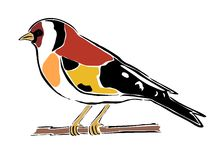 Goldfinch Stock Illustrations.