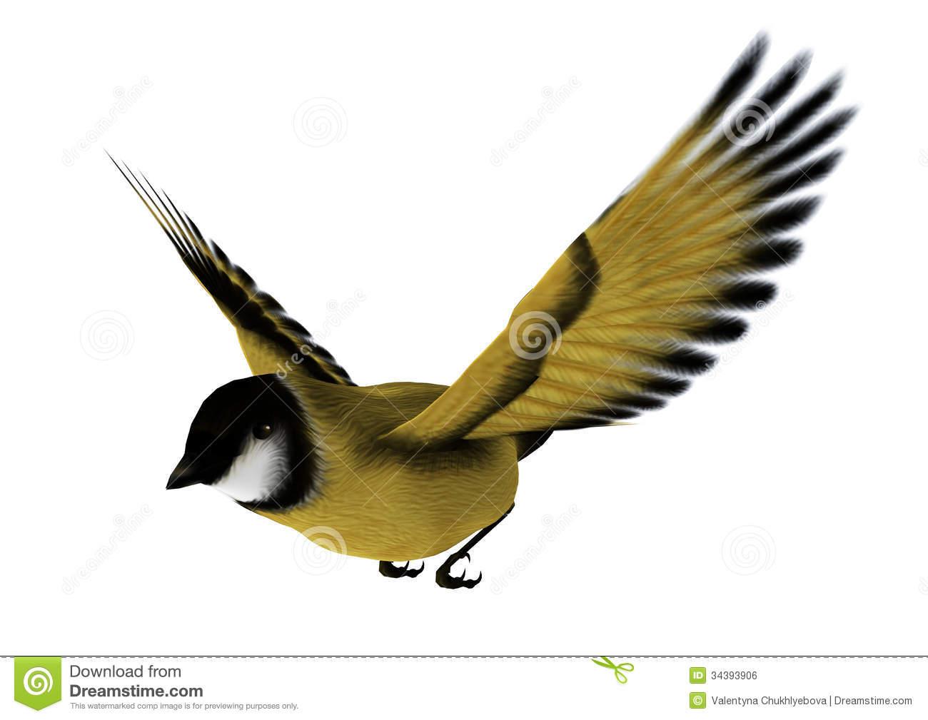 Goldfinch Stock Illustrations.