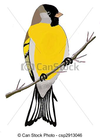 Goldfinch Illustrations and Stock Art. 129 Goldfinch illustration.