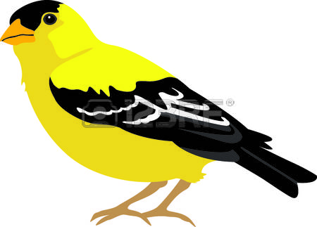 224 Goldfinch Stock Illustrations, Cliparts And Royalty Free.