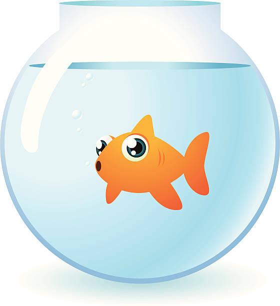 Best Goldfish Bowl Illustrations, Royalty.