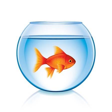 1,736 Goldfish Bowl Cliparts, Stock Vector And Royalty Free Goldfish.