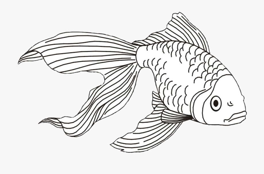 Goldfish Clipart Beta Fish.