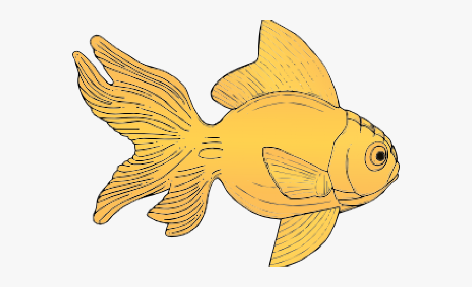 Gold Fish Clipart Goldfish Outline.