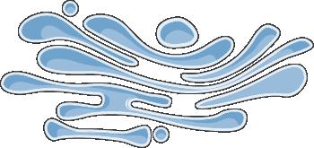 Golgi apparatus.