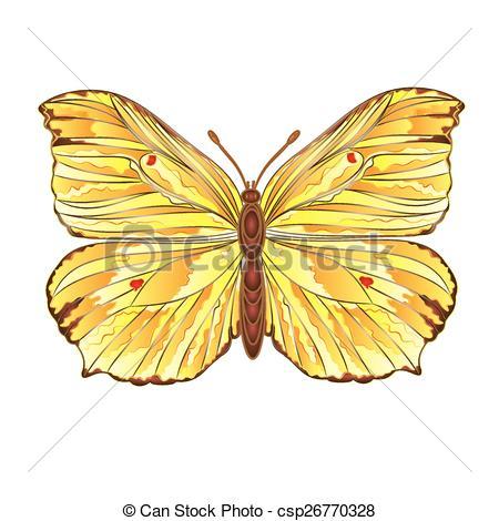 Vector Illustration of Butterfly Gonepteryx rhamni beautiful.
