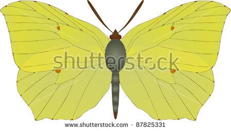 Gonepteryx Rhamni Stock Vectors & Vector Clip Art.