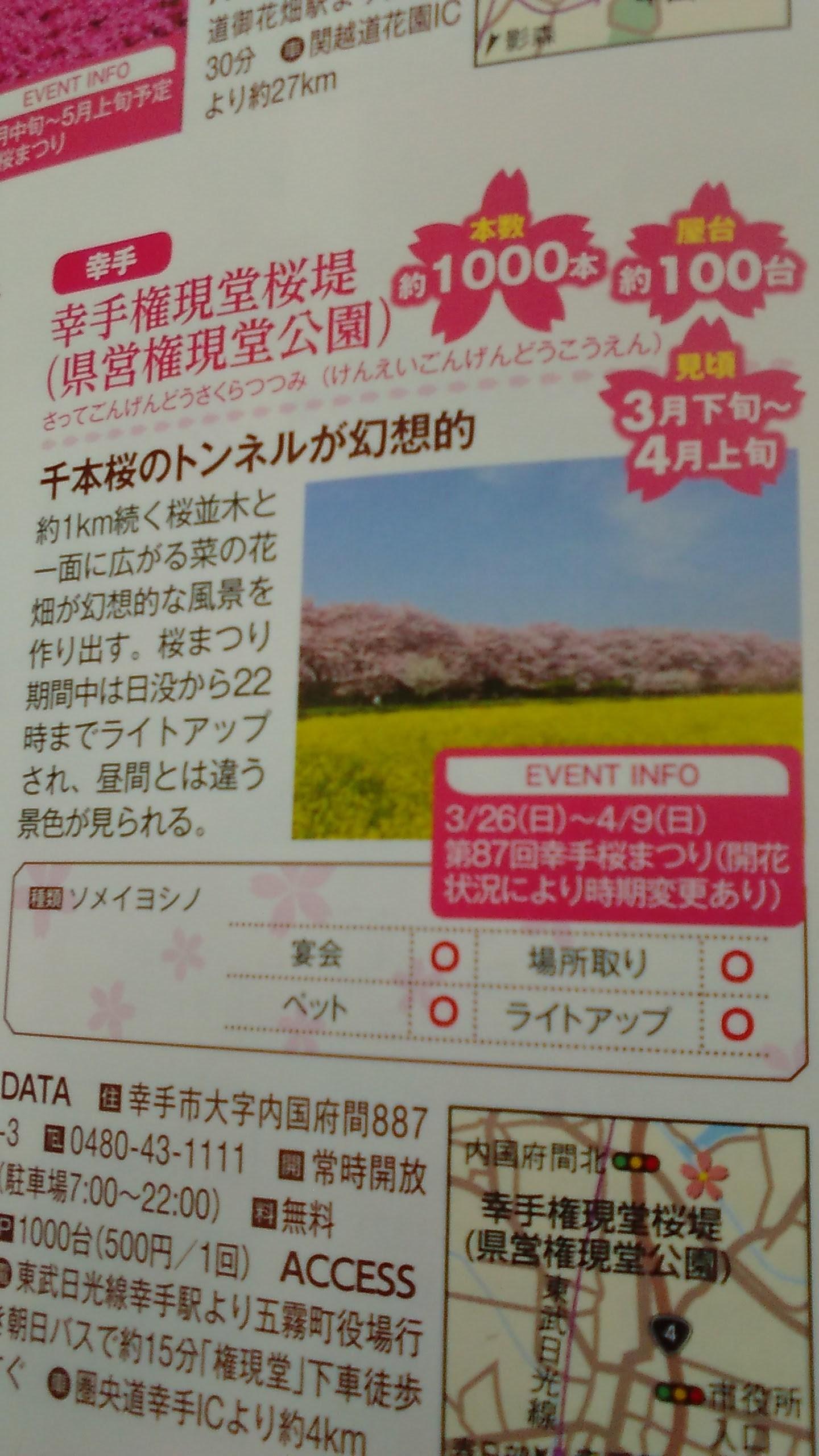 Cherry Blossom Festival at Gongendo Park.