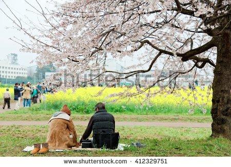Sakura Park Stock Photos, Royalty.