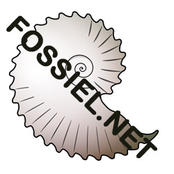 Fossil ID System Search results.