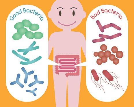 Good Bacteria and Bad Bacteria premium clipart.