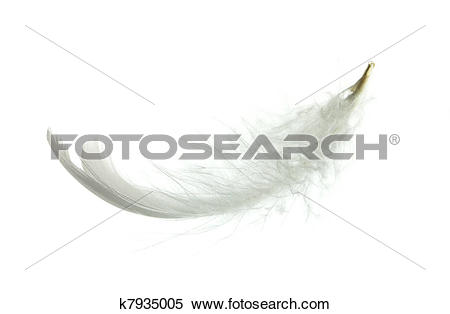 Stock Image of White goose feather k7935005.