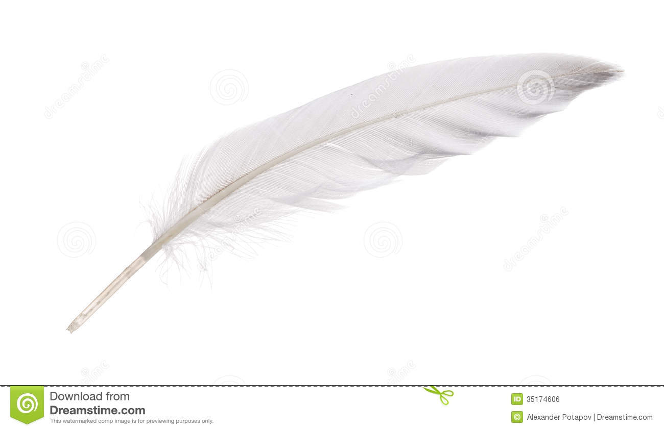 Isolated White Goose Feather Royalty Free Stock Image.