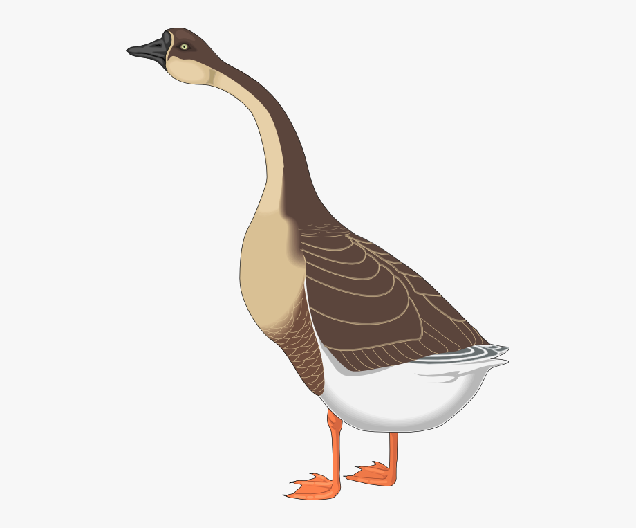Goose Clipart Farm Animal.