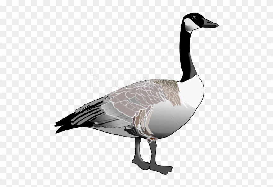 Free Png Download Goose Png Images Background Png Images.