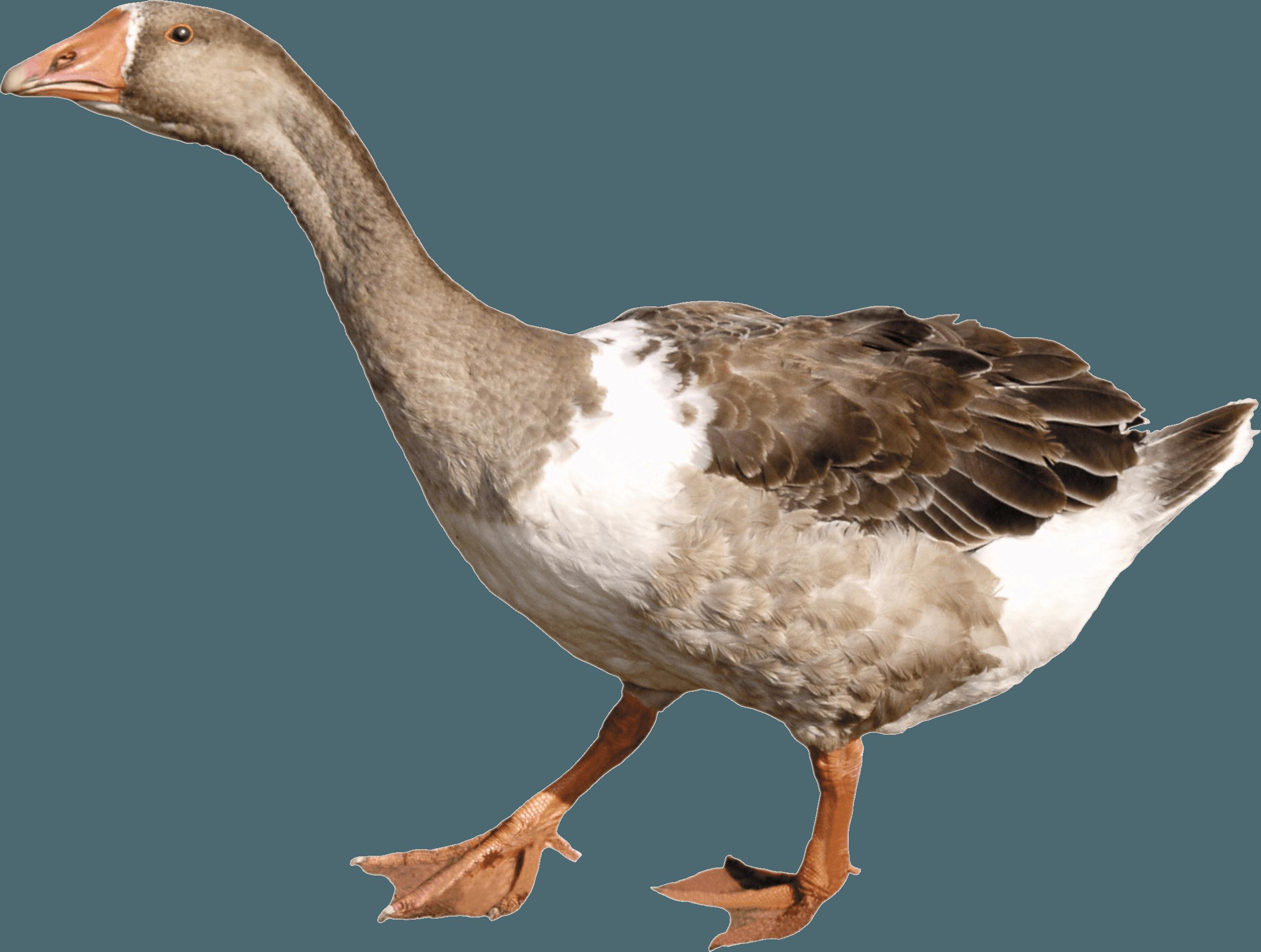 goose PNG Image.